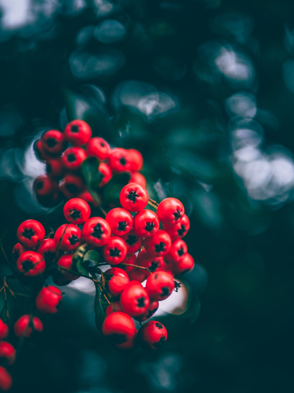 selective focus photography of round red fruits