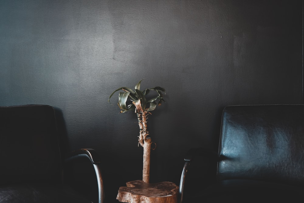 two black armchairs beside wall
