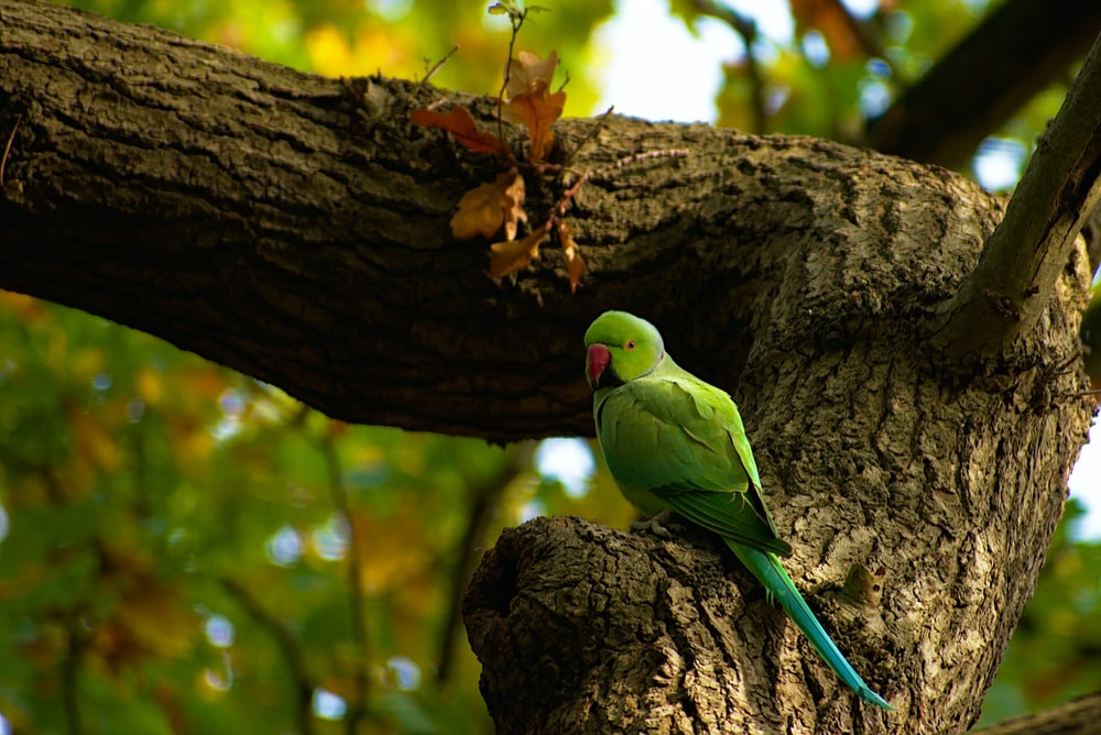 selective focus photography of green bird on tree during daytime