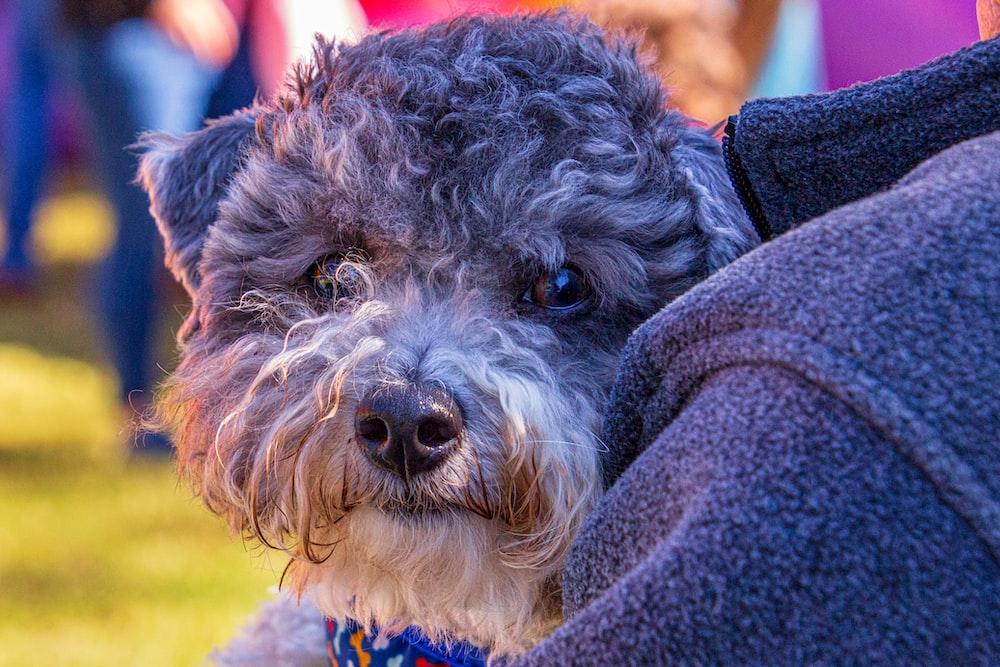 dog beside black textile