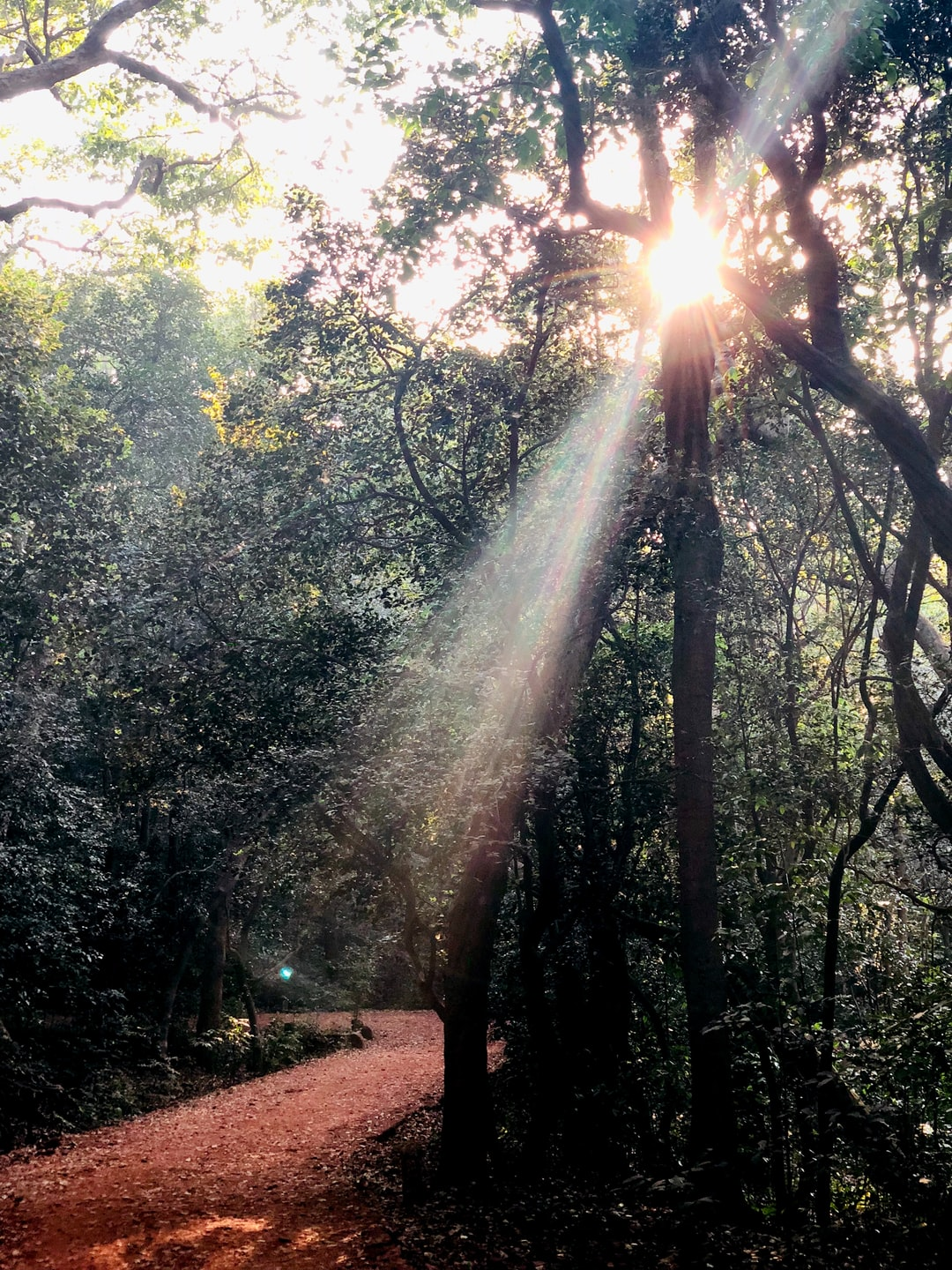 Piercing sun rays through the dense forest (Not by me)