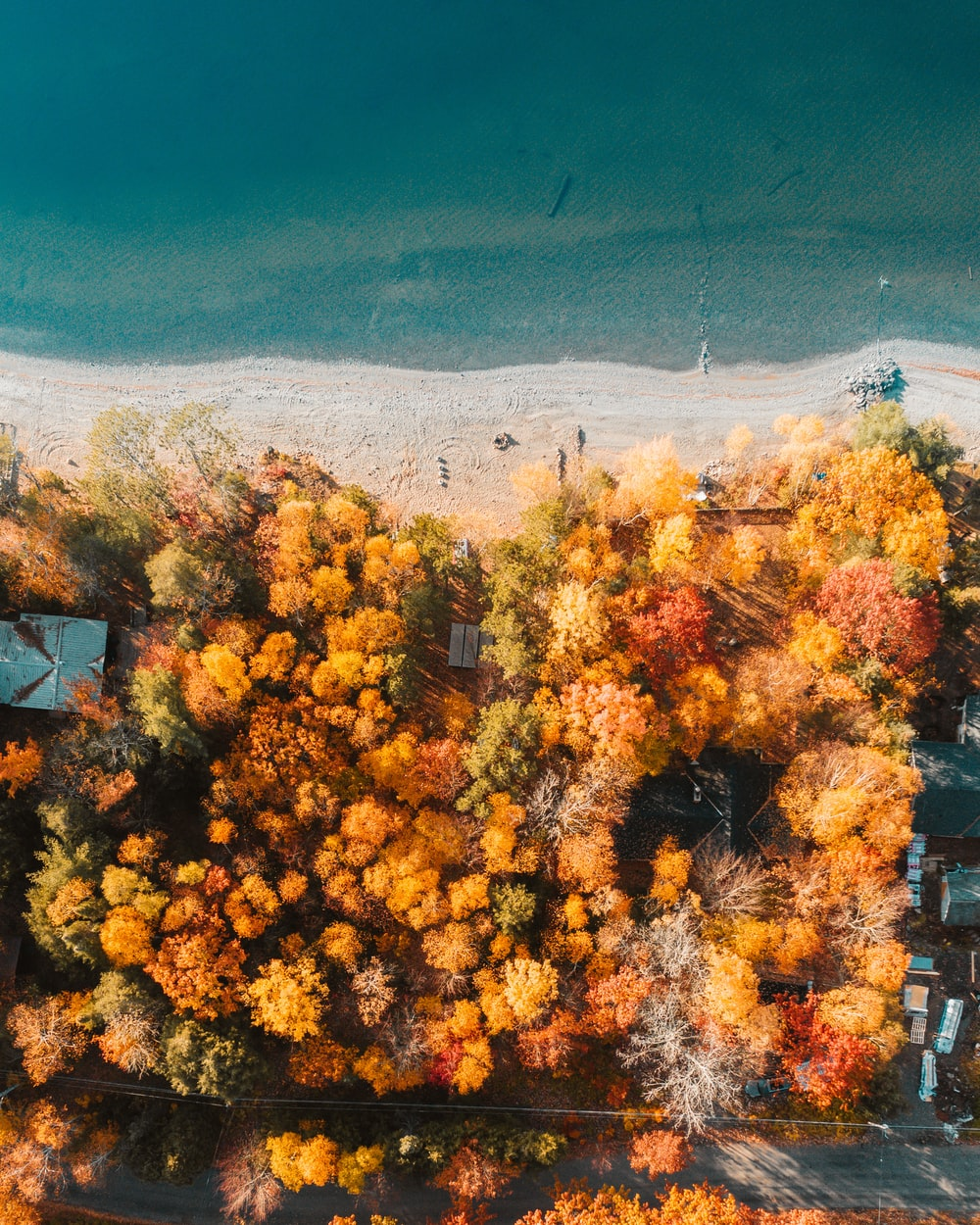 orange leaf trees