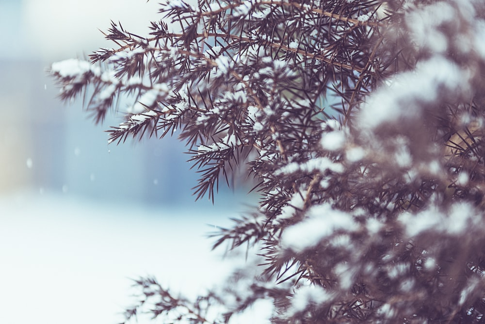 selective focus photography of trees covered in white snow