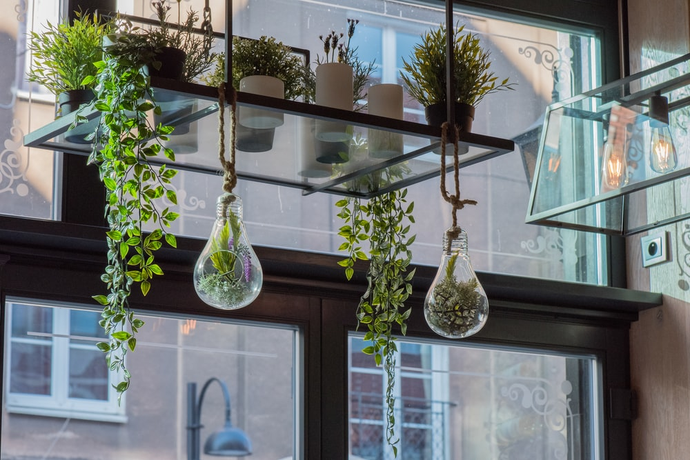two clear glass hanging plants