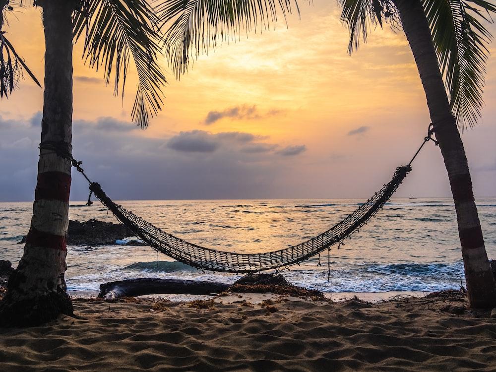black hammock hanging between coconut tree on beach during golden hour