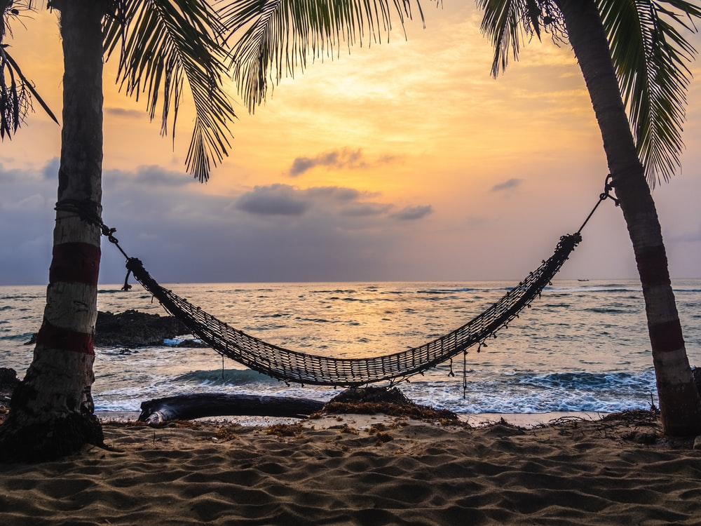 black hammock hanging between coconut tree on beach during golden hour
