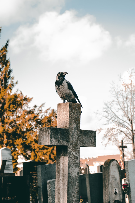 gray bird on cross during daytime
