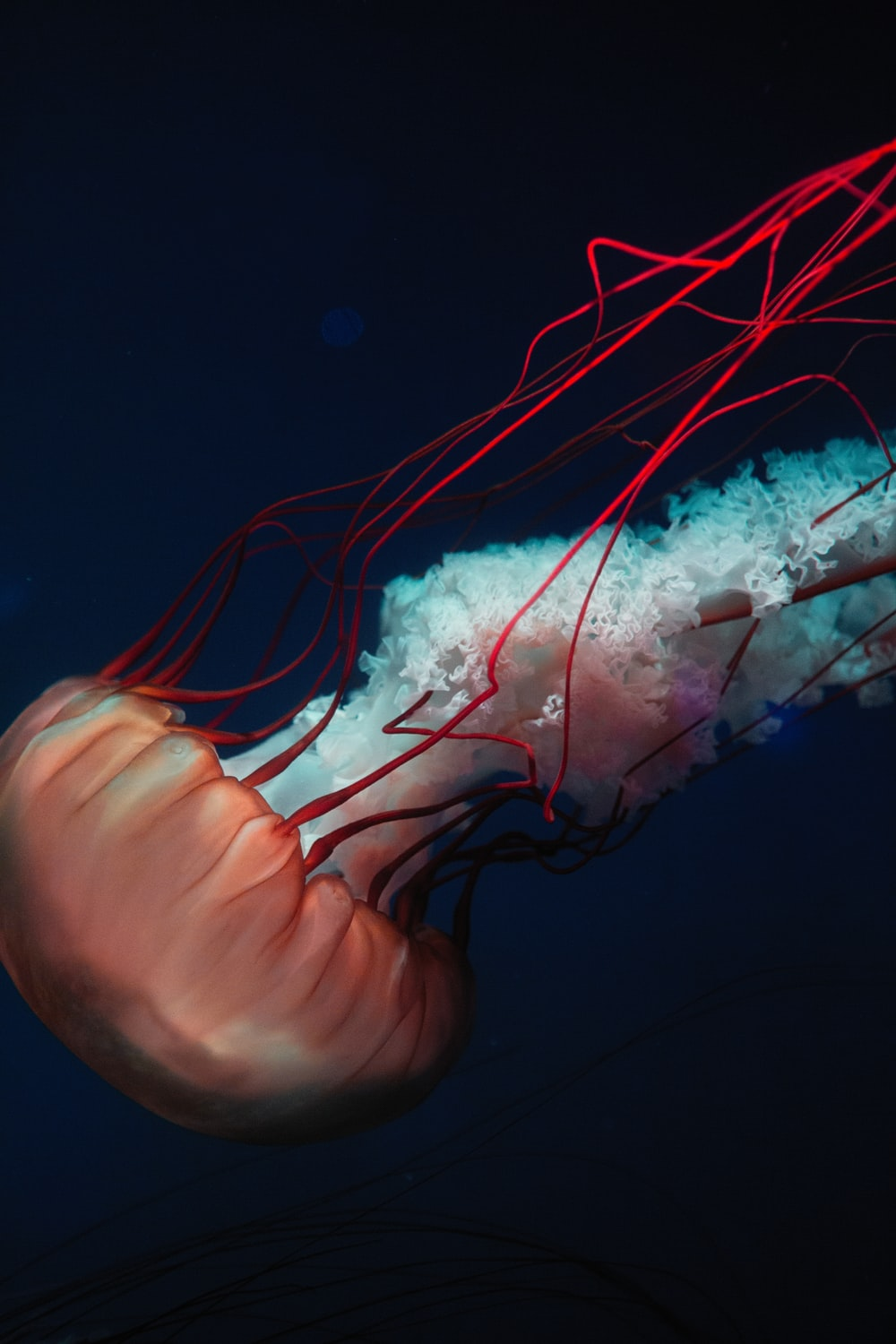 shallow focus photo of red jellyfish