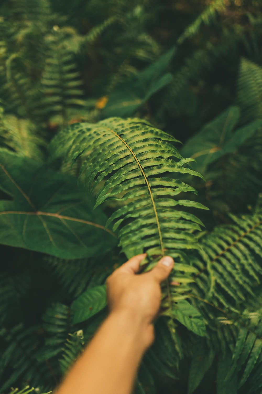 shallow focus photo of fern plants