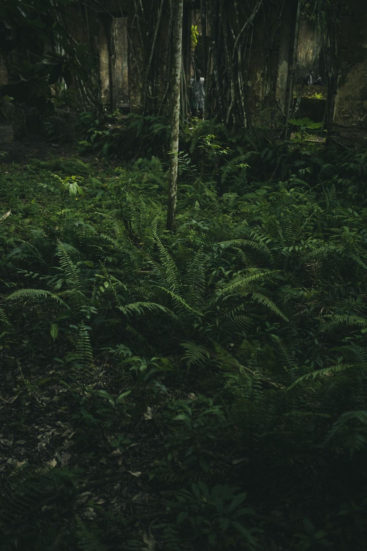 green grass field inside forest