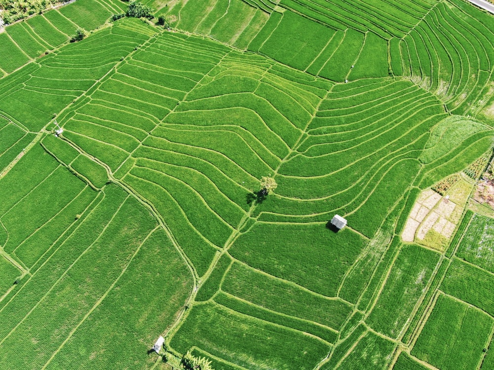high angle photography of plant field during daytime