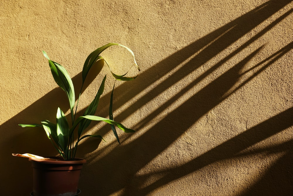 green plants beside brown wall
