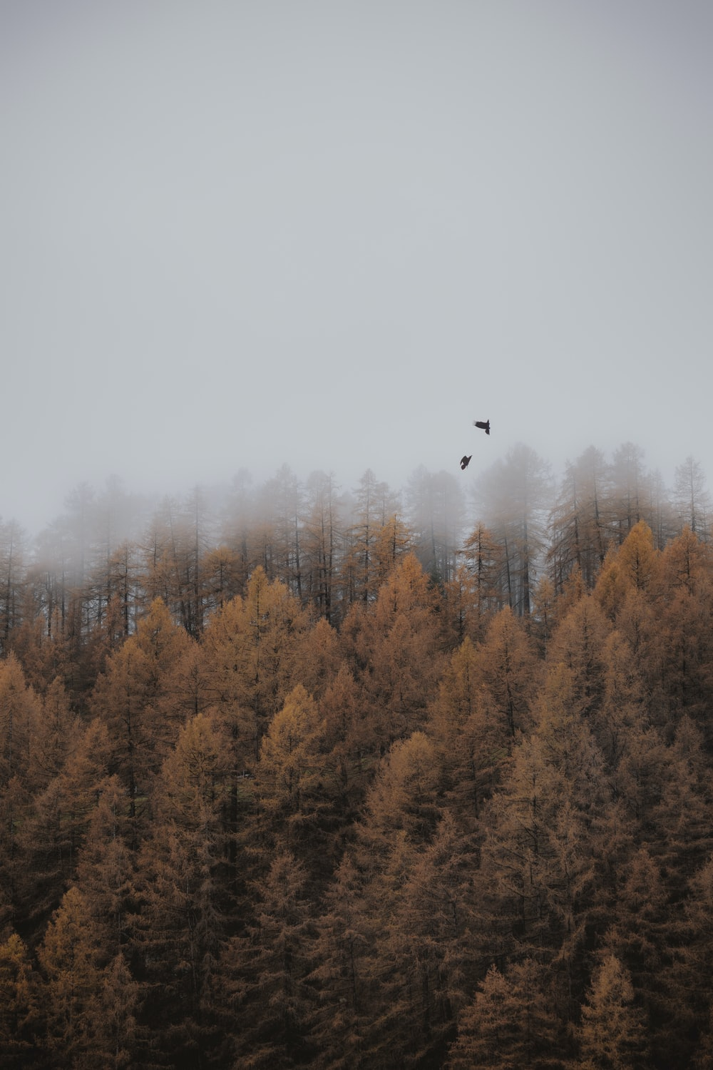 aerial photo of brown trees under cloudy sky