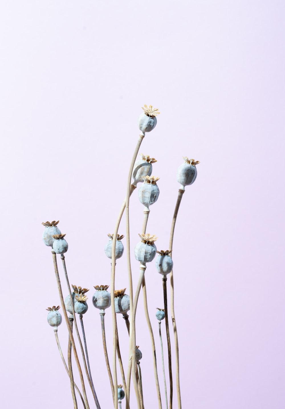 blue-petaled flowers