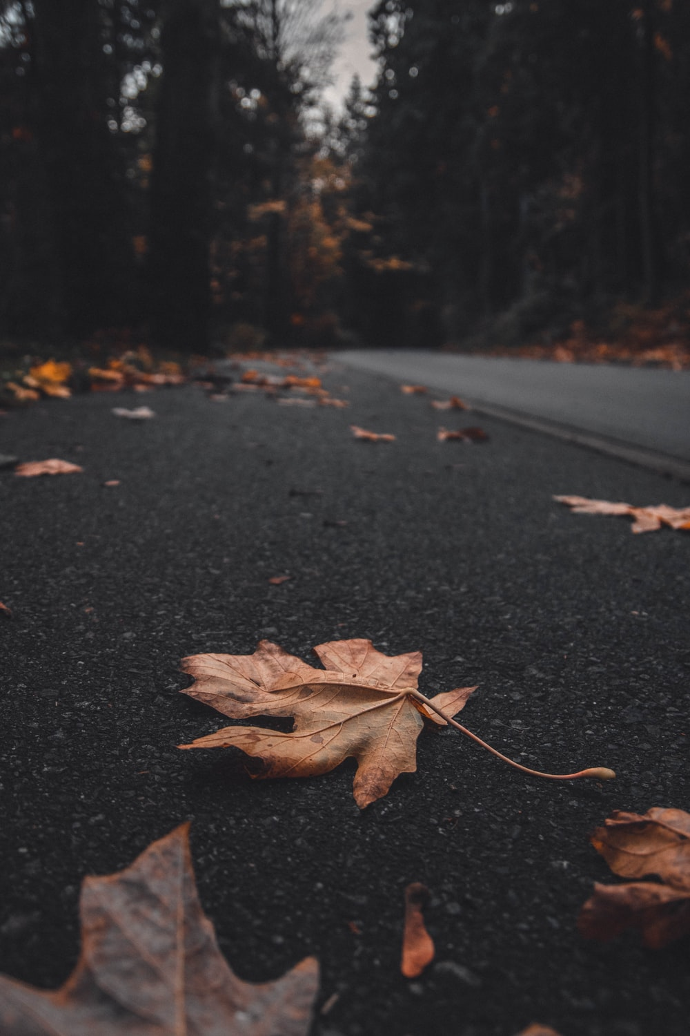 selective focus photography of brown leaves on road during daytime