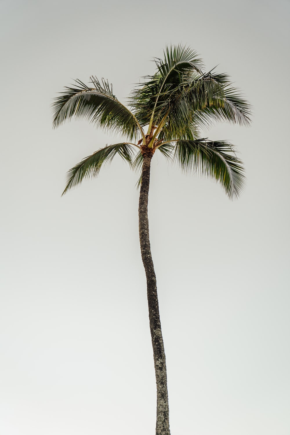 coconut tree during daytime