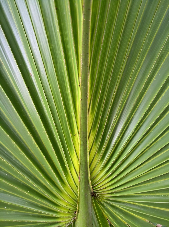 closeup photo of green leaf