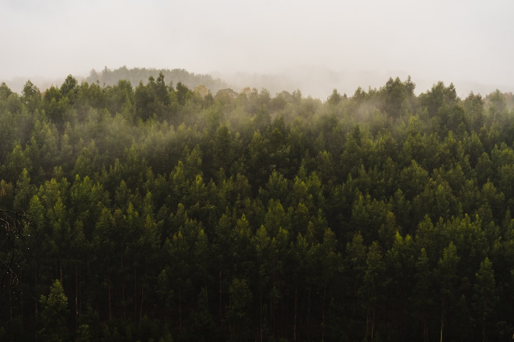 aerial photography of green forest during foggy day