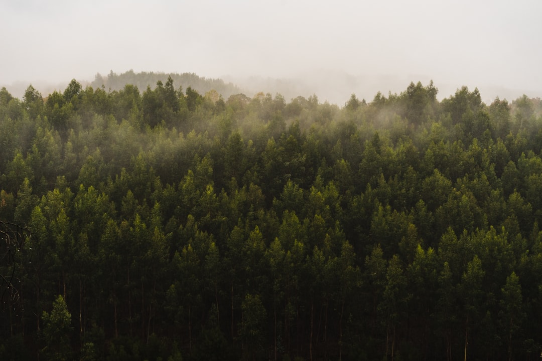 Misty forest in the rain. If you look closely you can see the texture that the raindrops added, a bit like brushstrokes.