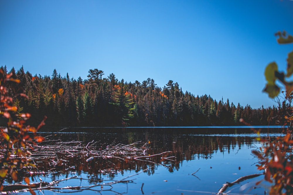 forest trees near calm lake during clear blue sky