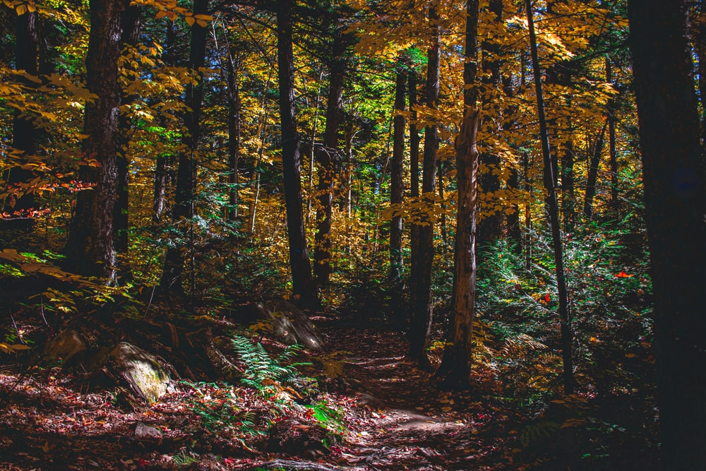 brown leafy forest trees during daytime