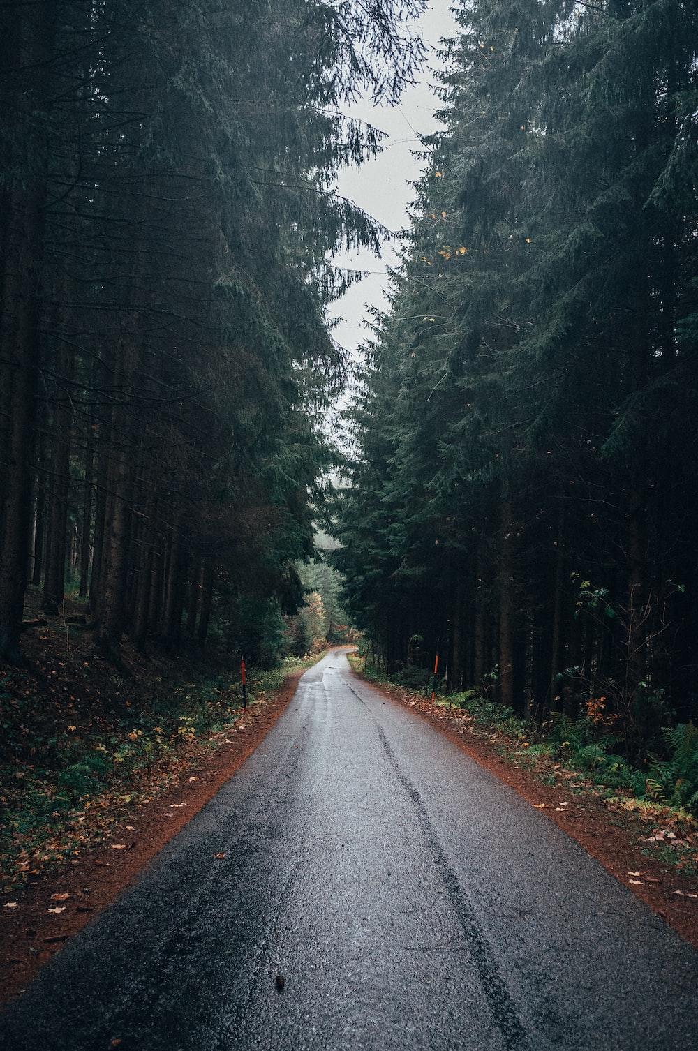 gray road between trees