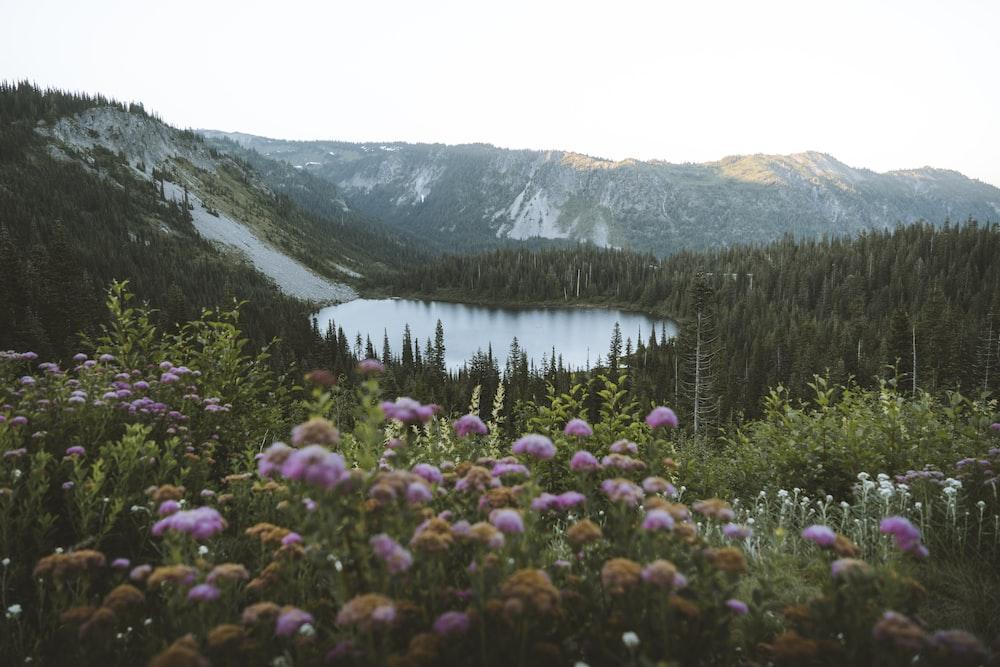 high angle photo of lake