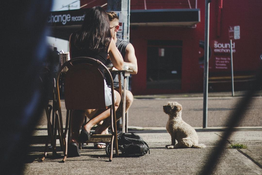 cafe, little white dog waiting, best behaviour