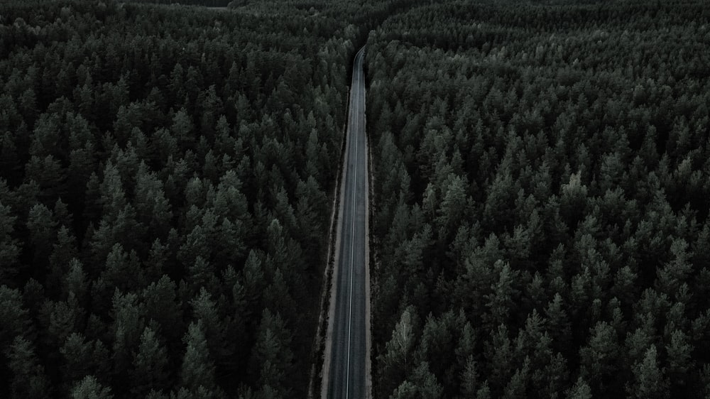 aerial photograph of road between trees