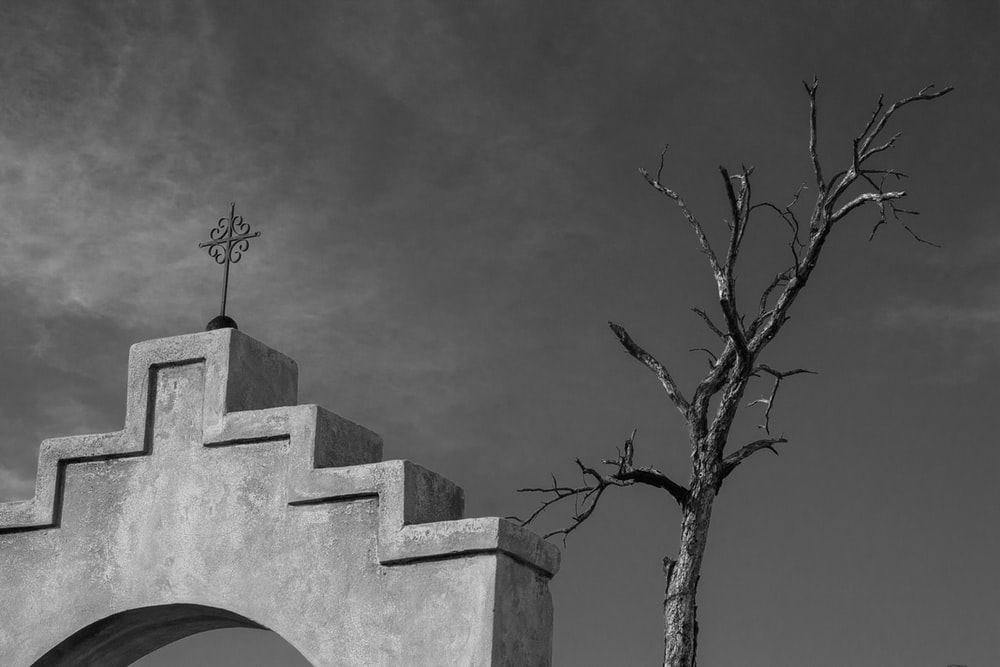 greyscale photography of bare tree