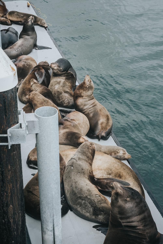seals on dock