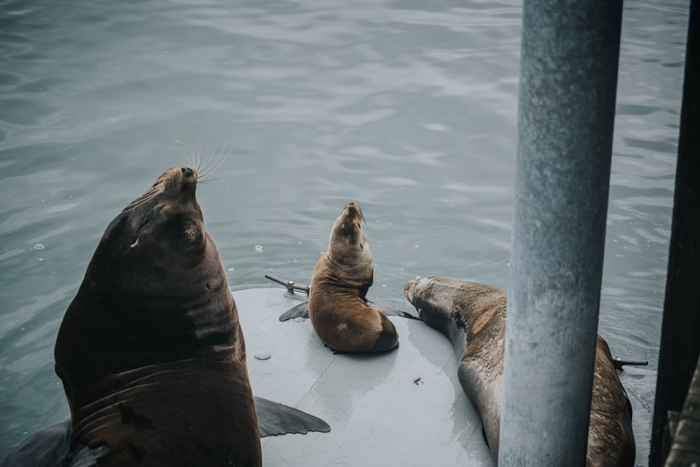 seals in theme park