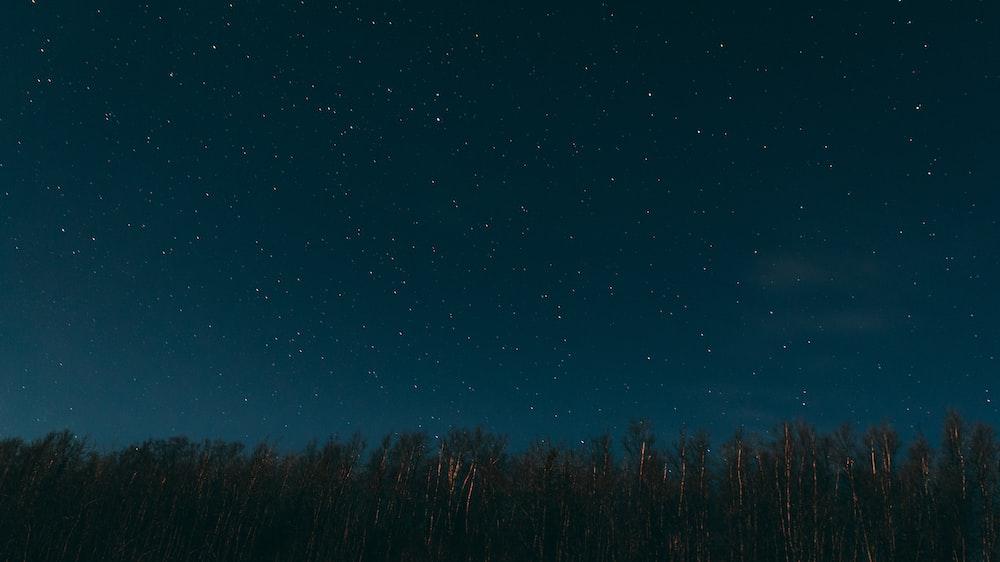 green forest trees under star gazing