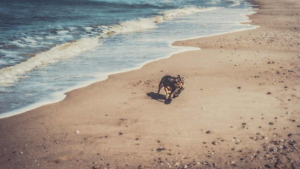 dog on shore near body of water