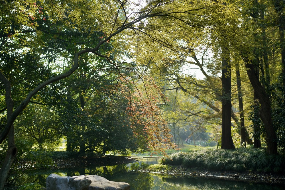 body of water under green trees during daytime