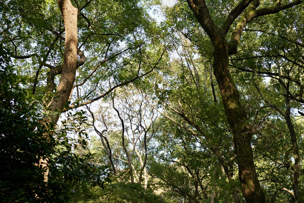 low-angle photography of green-leafed trees under a calm blue sky