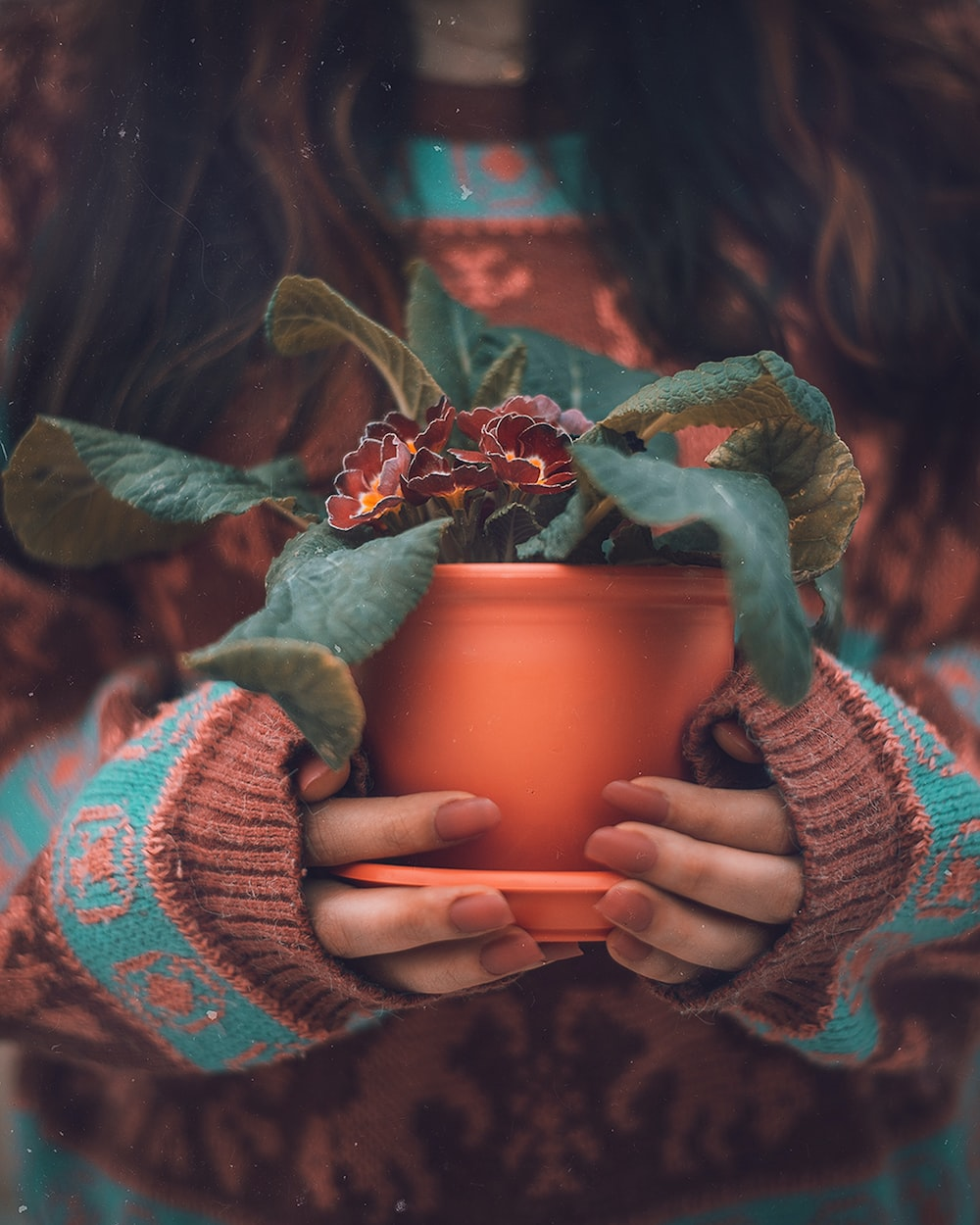 woman holding green potted plant