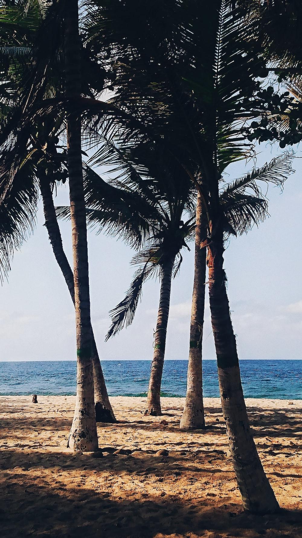 palm tree beside beach line