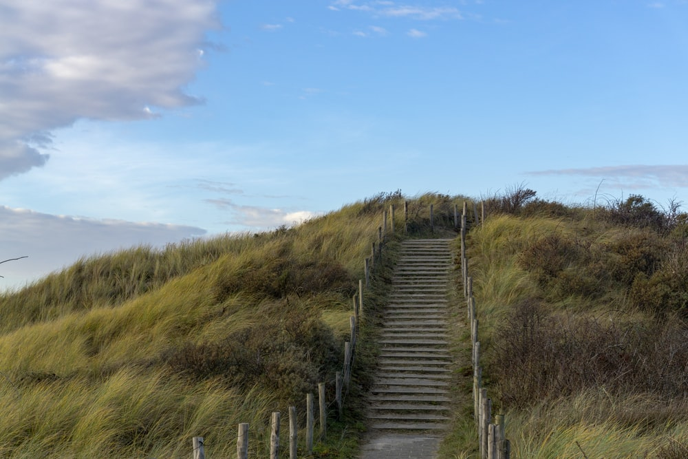 stair pathway and grass field