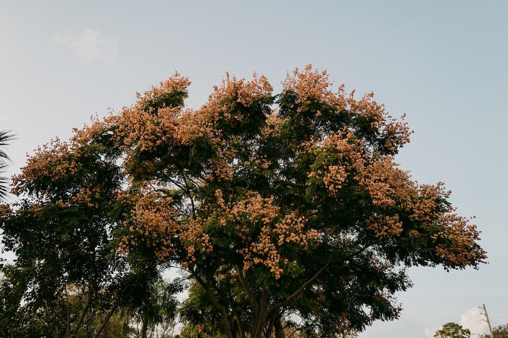 tree beside plants