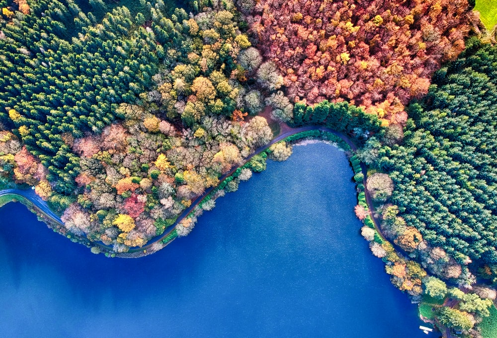aerial photograph of forest beside body of water