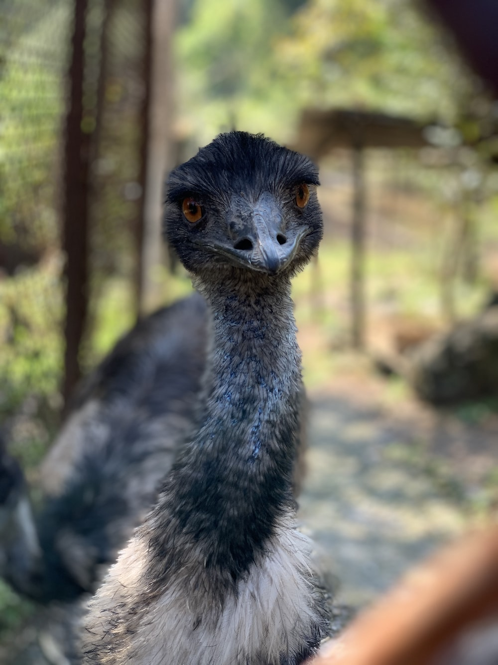 selective focus photography of gray ostrich