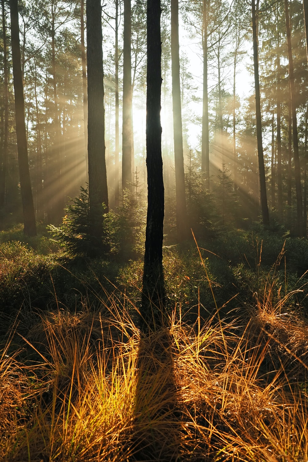 forest trees at daytime