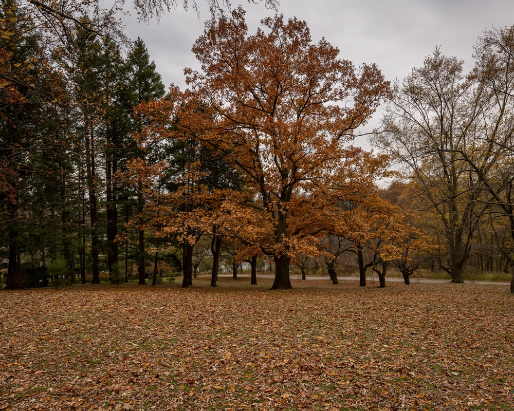 orange and green-leafed trees