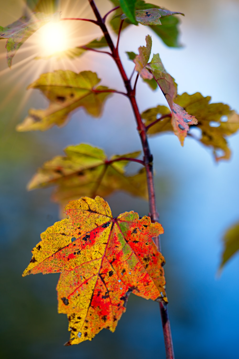 green and orange leafed plant