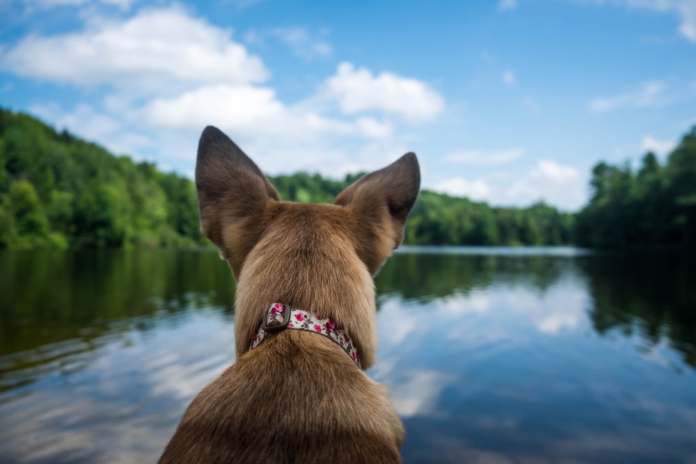 selective focus photography of dog in front of body of water during daytime