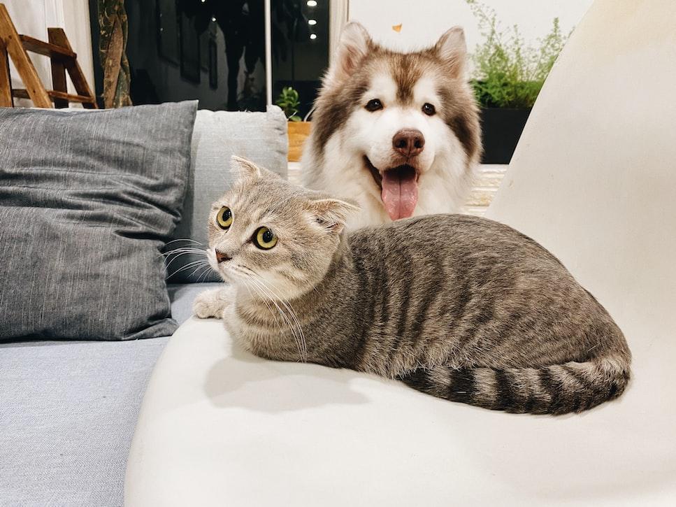 warna sesuai kepribadian - kucing dan anjing