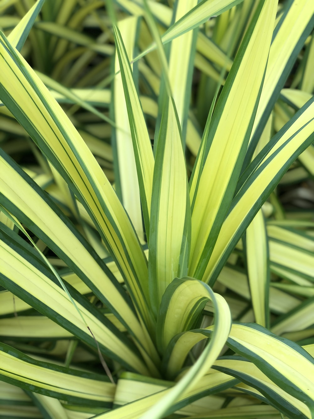 yellow and green leaf plant