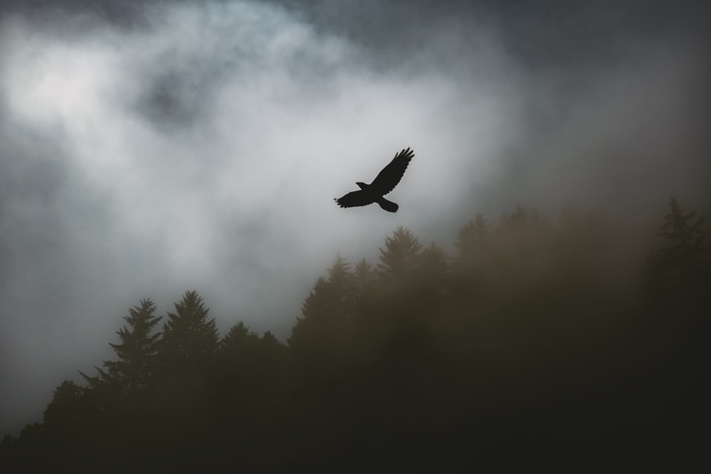 bird flying above the tree silhouette