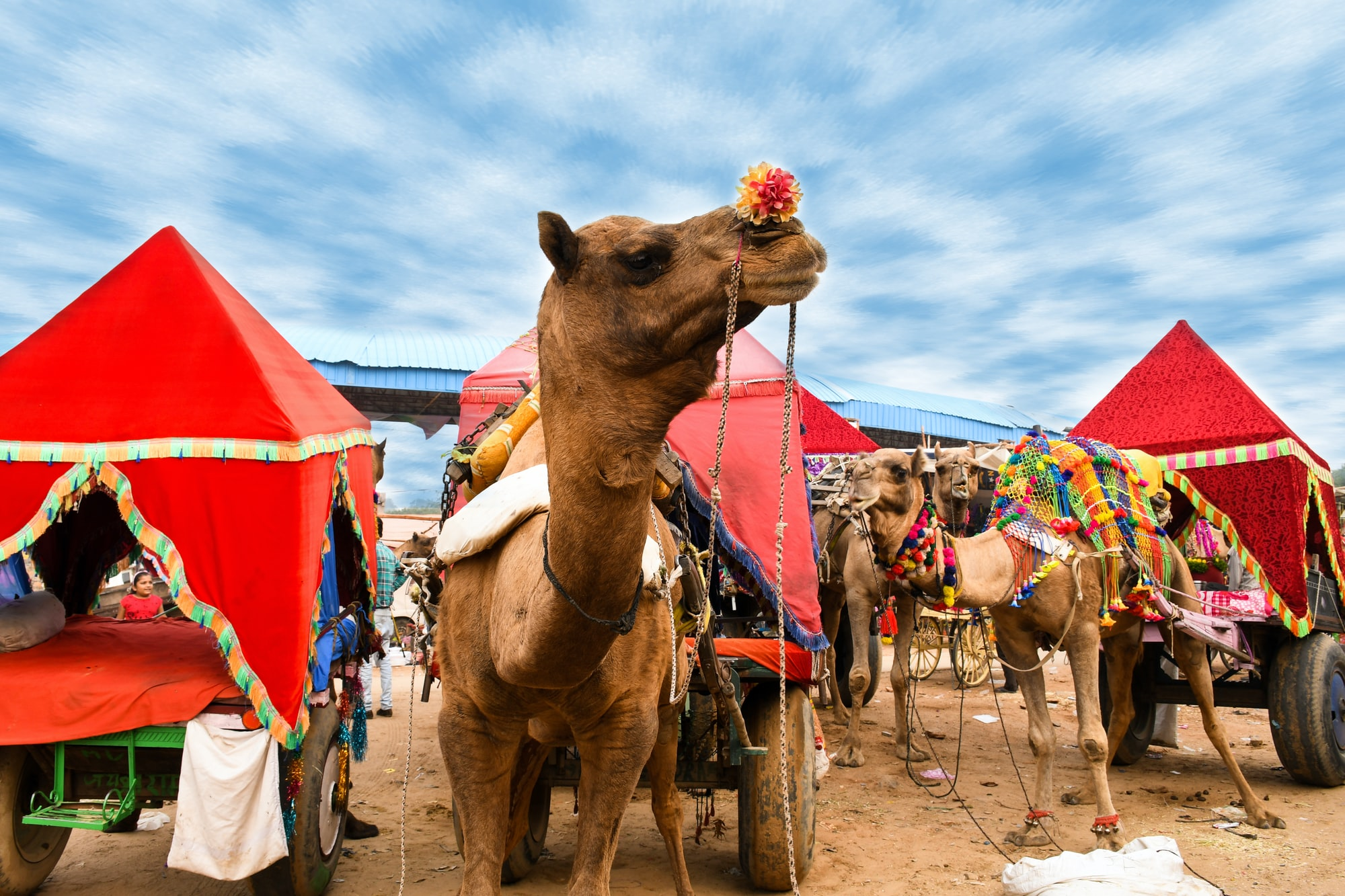 Pushkar Fair, Camel Ride